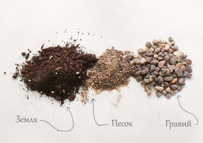 Склад ґрунту для сукулентів