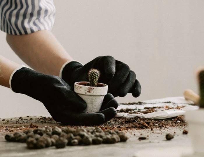 Приготування грунту для кактусів