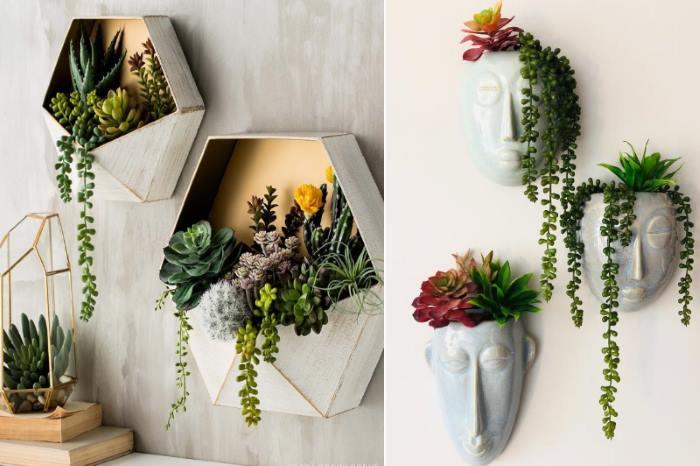 Сукуленти в декорі дому: прикрашаєм стіни