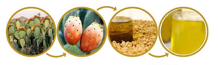 Масло з насіння Опунції