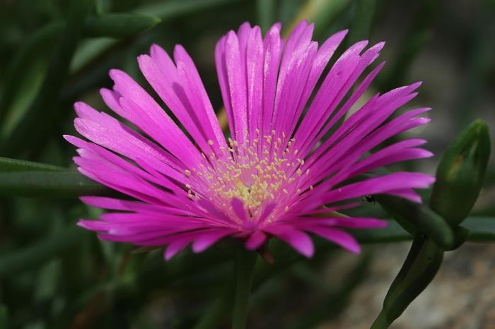 Фото квітки