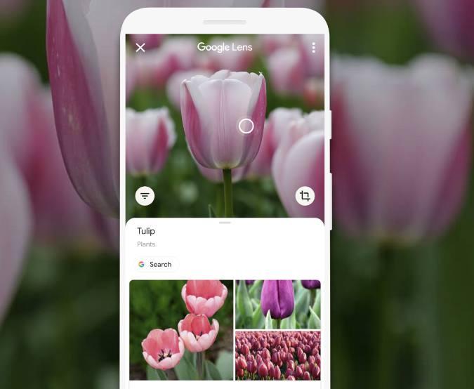 Приложения для определения растений: Google Lens