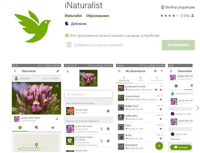 Приложения для определения растений: iNaturalist