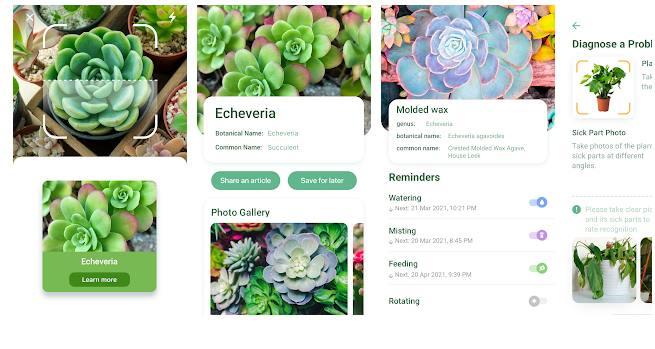 Бесплатное приложение для определения растений NatureID