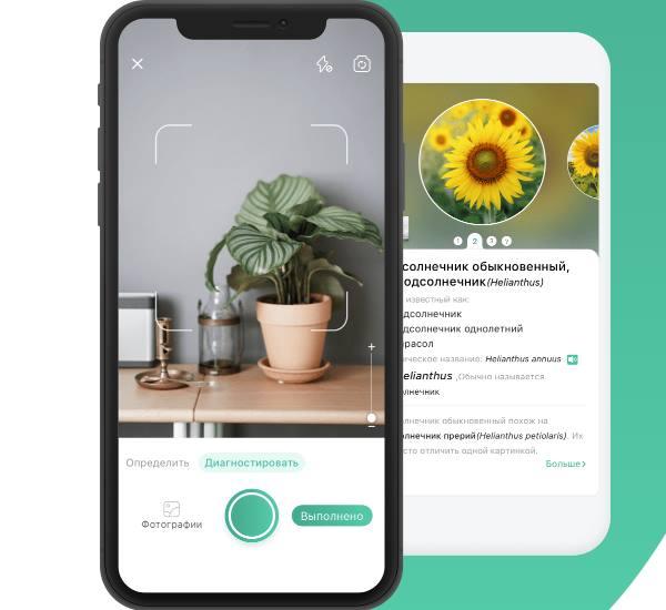 Приложение для определения растений по фото PictureThis