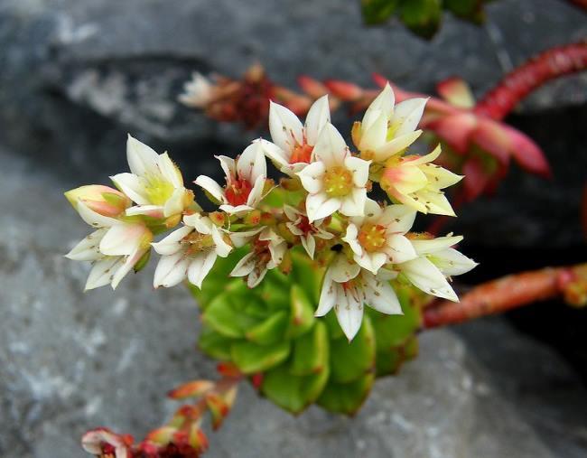 Фото цветов Гибрида